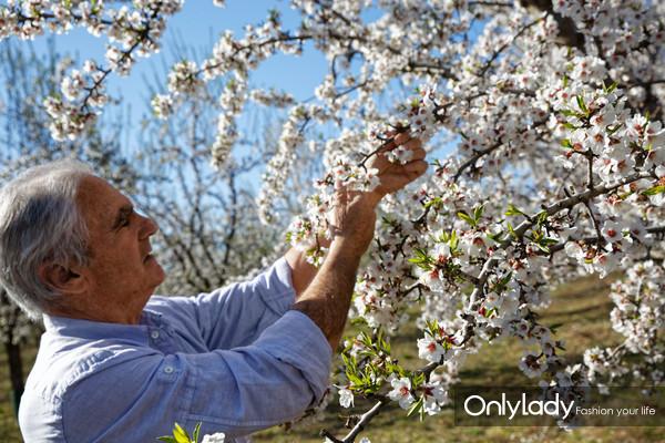 欧舒丹甜扁桃树种植者